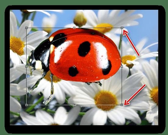 Уменьшение масштаба изображения в Фотошопе